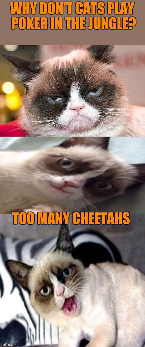 Bad pun grumpy cat | WHY DON'T CATS PLAY POKER IN THE JUNGLE? TOO MANY CHEETAHS | image tagged in bad pun grumpy cat,memes,jokes,poker,jungle,cheetah | made w/ Imgflip meme maker