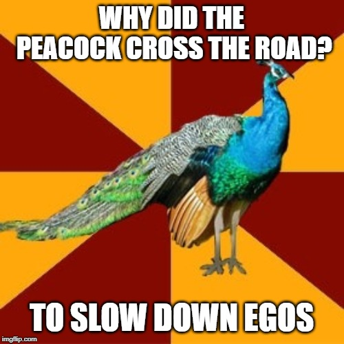 Thespian peacock | WHY DID THE PEACOCK CROSS THE ROAD? TO SLOW DOWN EGOS | image tagged in thespian peacock | made w/ Imgflip meme maker
