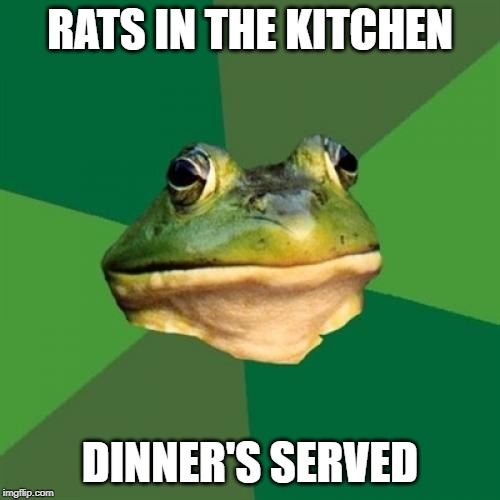 Foul Bachelor Frog Meme | RATS IN THE KITCHEN DINNER'S SERVED | image tagged in memes,foul bachelor frog | made w/ Imgflip meme maker
