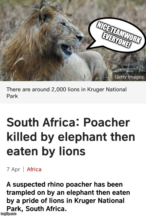 Glad to see the Animal Kingdom is finally coming together! :) | NICE TEAMWORK EVERYONE! | image tagged in animals,funny,memes,africa,teamwork,lions | made w/ Imgflip meme maker