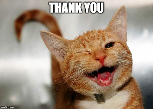 Cat Wink | THANK YOU | image tagged in cat wink | made w/ Imgflip meme maker