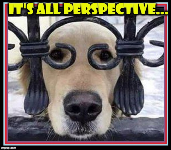They Call Me Prince but I'd Settle for a Butt Sniff & & a Bone | IT'S ALL PERSPECTIVE... | image tagged in vince vance,dogs,it's a dog's life,voyeur,peeping tom,dog memes | made w/ Imgflip meme maker