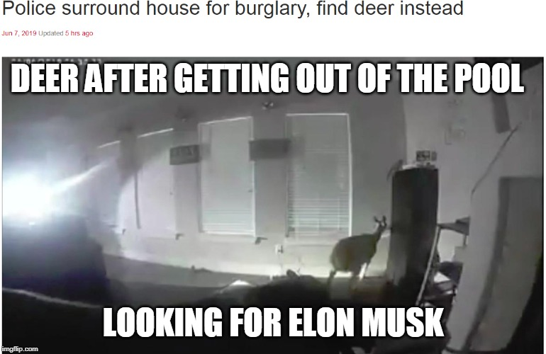 DEER AFTER GETTING OUT OF THE POOL LOOKING FOR ELON MUSK | image tagged in elon musk,deer | made w/ Imgflip meme maker