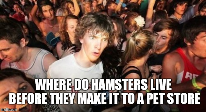 Mind Breaking | WHERE DO HAMSTERS LIVE BEFORE THEY MAKE IT TO A PET STORE | image tagged in memes,sudden clarity clarence | made w/ Imgflip meme maker