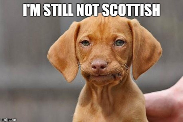 Dissapointed puppy | I'M STILL NOT SCOTTISH | image tagged in dissapointed puppy | made w/ Imgflip meme maker