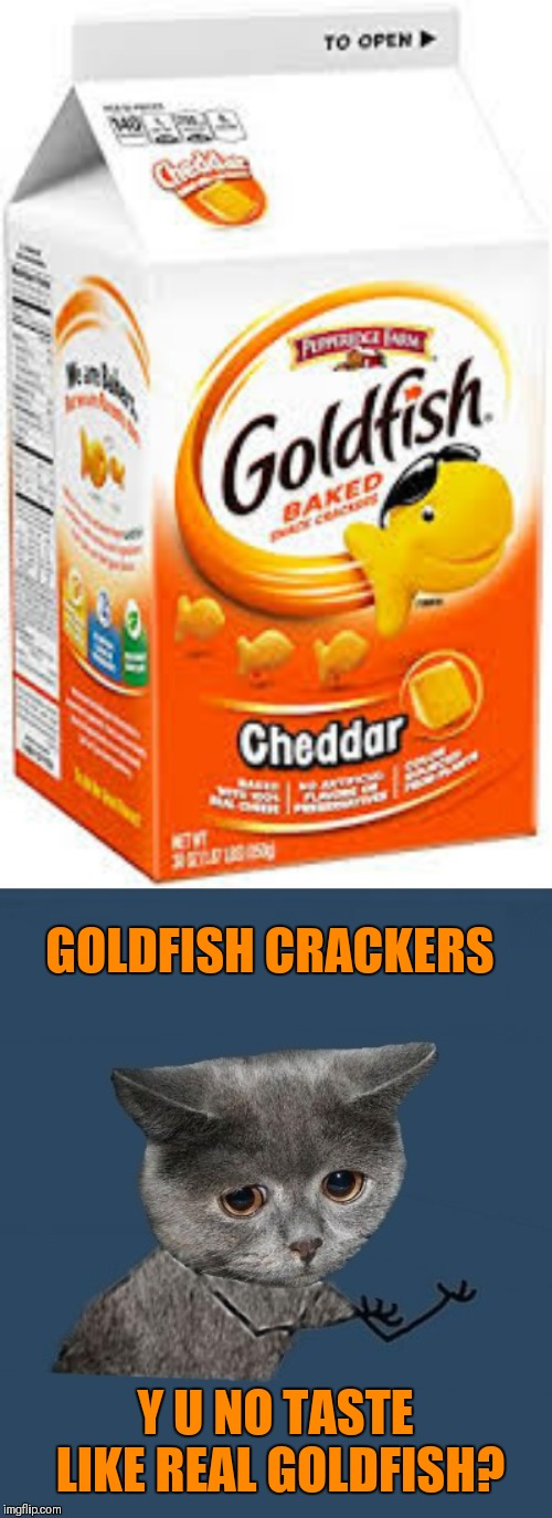 GOLDFISH CRACKERS Y U NO TASTE LIKE REAL GOLDFISH? | image tagged in goldfish crackers,y u no sad cat | made w/ Imgflip meme maker