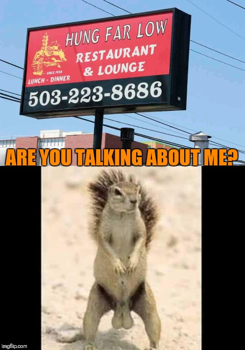 Hung Far Low |  ARE YOU TALKING ABOUT ME? | image tagged in squirrel nuts,stupid signs,restaurant,44colt,squirrels,funny | made w/ Imgflip meme maker
