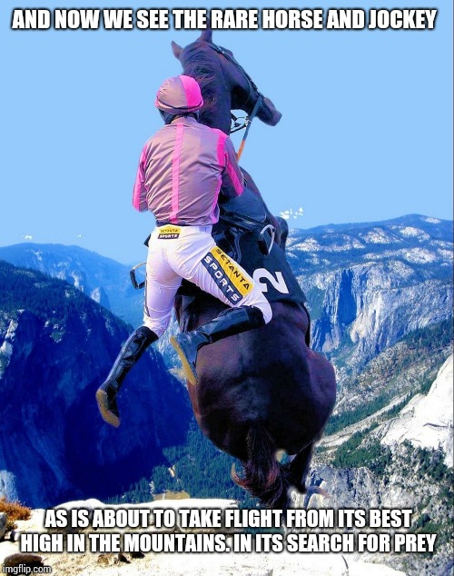 AND NOW WE SEE THE RARE HORSE AND JOCKEY AS IS ABOUT TO TAKE FLIGHT FROM ITS BEST HIGH IN THE MOUNTAINS. IN ITS SEARCH FOR PREY | image tagged in horse | made w/ Imgflip meme maker