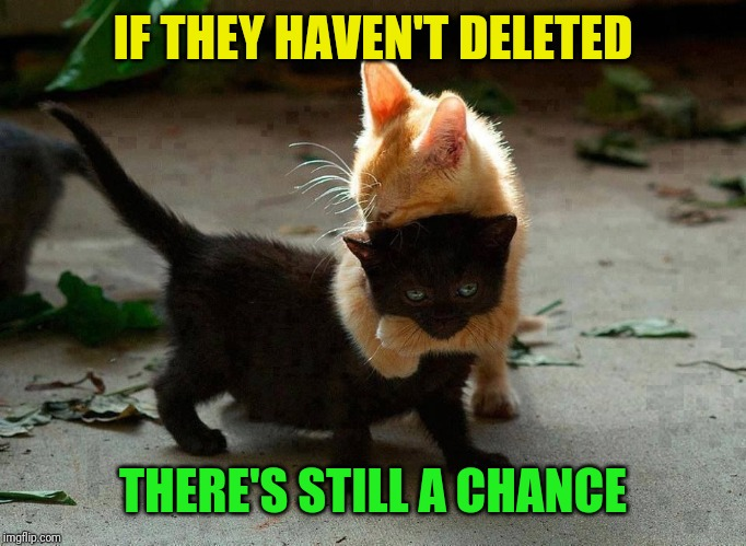 kitten hug | IF THEY HAVEN'T DELETED THERE'S STILL A CHANCE | image tagged in kitten hug | made w/ Imgflip meme maker
