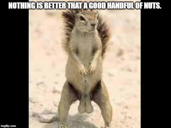 Squirrel nuts | NOTHING IS BETTER THAT A GOOD HANDFUL OF NUTS. | image tagged in squirrel nuts | made w/ Imgflip meme maker