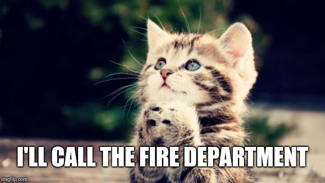 Cute kitten | I'LL CALL THE FIRE DEPARTMENT | image tagged in cute kitten | made w/ Imgflip meme maker