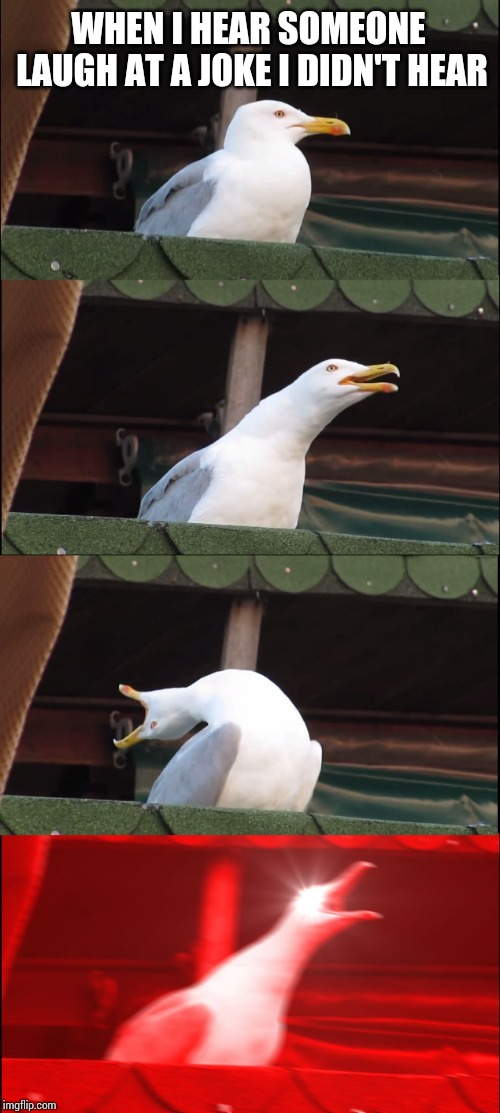 Inhaling Seagull Meme | WHEN I HEAR SOMEONE LAUGH AT A JOKE I DIDN'T HEAR | image tagged in memes,inhaling seagull | made w/ Imgflip meme maker