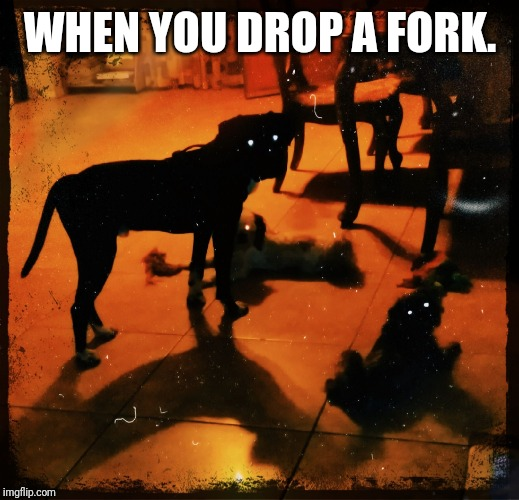 WHEN YOU DROP A FORK. | image tagged in dark bark | made w/ Imgflip meme maker