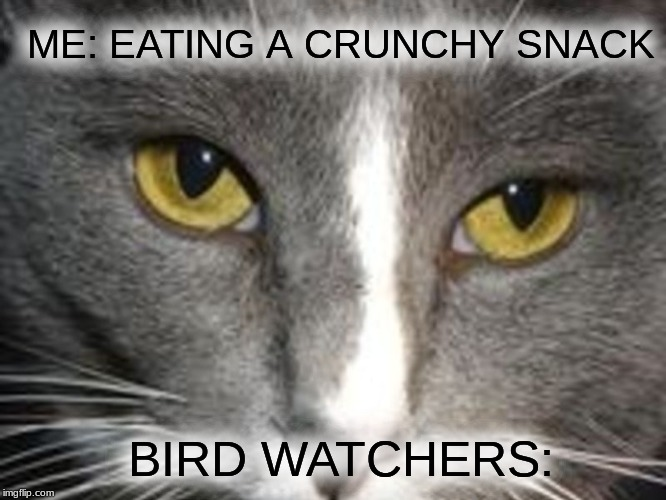 ME: EATING A CRUNCHY SNACK BIRD WATCHERS: | image tagged in unsettled tom ii,unsettled tom,birds,snacks | made w/ Imgflip meme maker