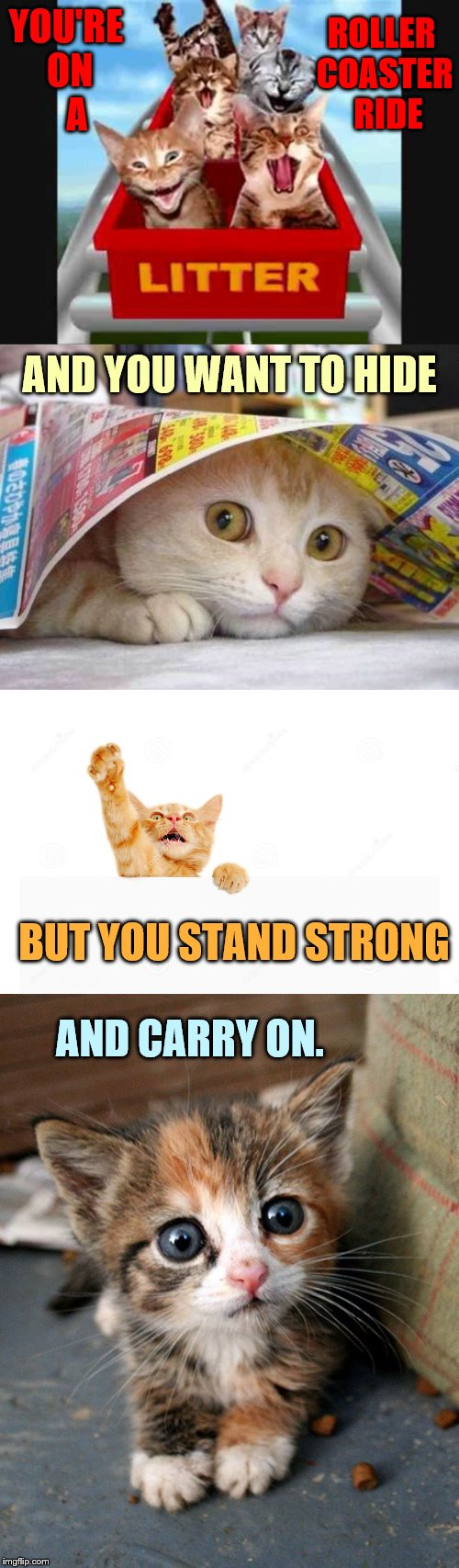 Some Times You Feel Like | YOU'RE ON    A AND CARRY ON. ROLLER COASTER  RIDE AND YOU WANT TO HIDE BUT YOU STAND STRONG | image tagged in memes,kitten,roller coaster,hide,stand,carry on | made w/ Imgflip meme maker