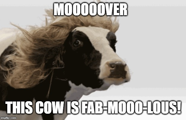 MOOOOOVER THIS COW IS FAB-MOOO-LOUS! | image tagged in memes | made w/ Imgflip meme maker