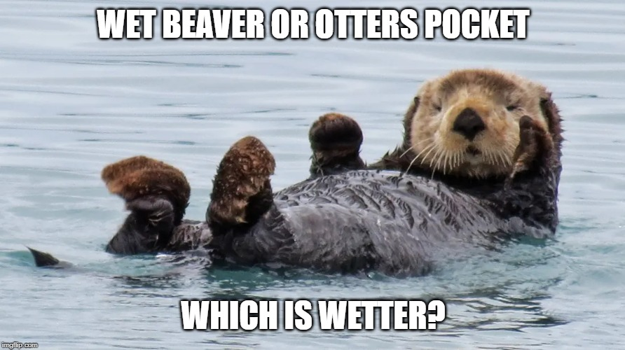 WET BEAVER OR OTTERS POCKET WHICH IS WETTER? | made w/ Imgflip meme maker