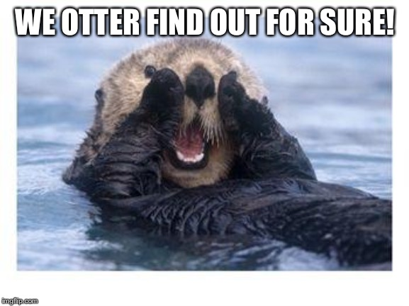 Excited Otter | WE OTTER FIND OUT FOR SURE! | image tagged in excited otter | made w/ Imgflip meme maker