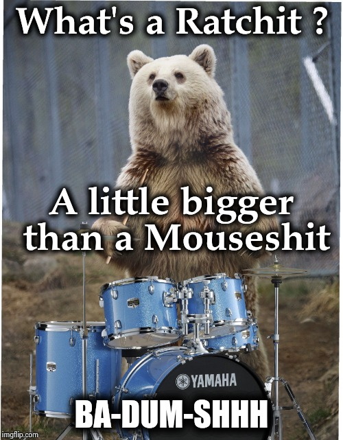 Drummer bear | What's a Ratchit ? BA-DUM-SHHH A little bigger than a Mouseshit | image tagged in drummer bear | made w/ Imgflip meme maker