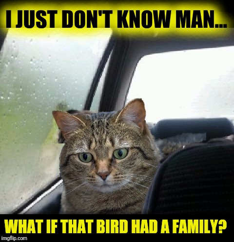 Introspective Cat |  I JUST DON'T KNOW MAN... WHAT IF THAT BIRD HAD A FAMILY? | image tagged in introspective cat,penny,i don't know | made w/ Imgflip meme maker