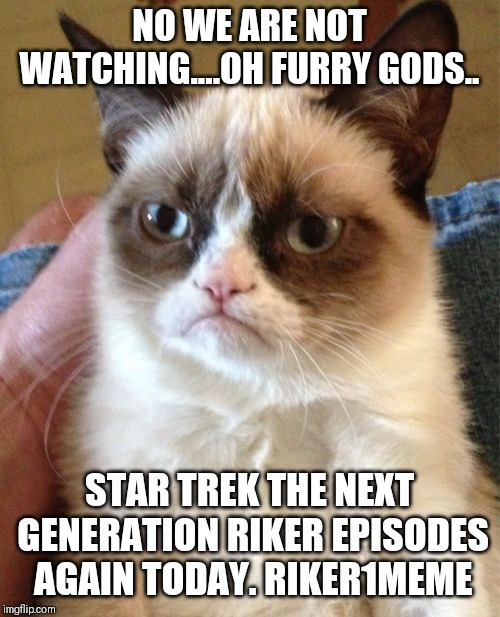 Grumpy Cat Meme | NO WE ARE NOT WATCHING....OH FURRY GODS.. STAR TREK THE NEXT GENERATION RIKER EPISODES AGAIN TODAY. RIKER1MEME | image tagged in memes,grumpy cat | made w/ Imgflip meme maker