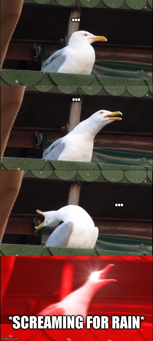 Them rain birds be like | ... ... ... *SCREAMING FOR RAIN* | image tagged in memes,inhaling seagull | made w/ Imgflip meme maker