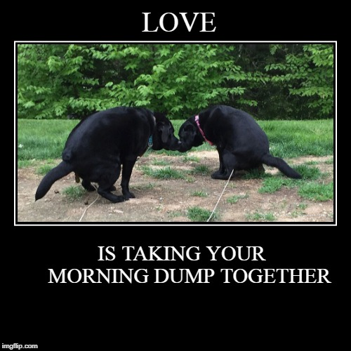 True Love | LOVE | IS TAKING YOUR      MORNING DUMP TOGETHER | image tagged in funny,demotivationals,morning constitutional,true love | made w/ Imgflip demotivational maker