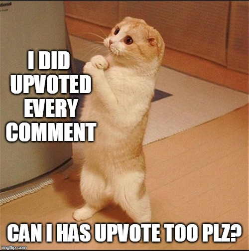 I DID UPVOTED EVERY COMMENT CAN I HAS UPVOTE TOO PLZ? | image tagged in can i has food | made w/ Imgflip meme maker