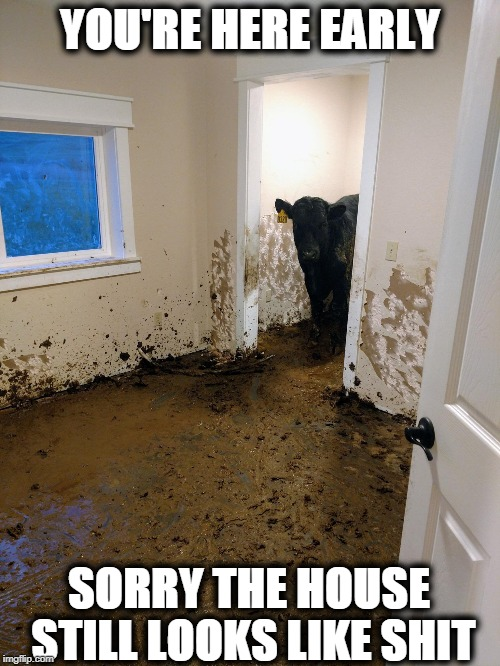 Bad Housekeeping |  YOU'RE HERE EARLY; SORRY THE HOUSE STILL LOOKS LIKE SHIT | image tagged in cow,house,dirty | made w/ Imgflip meme maker