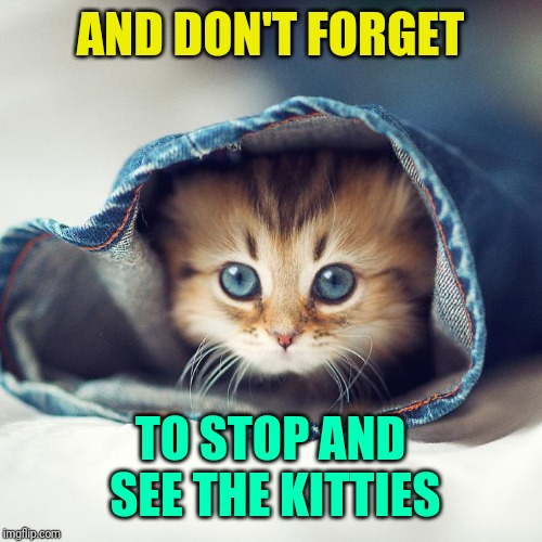 AND DON'T FORGET TO STOP AND SEE THE KITTIES | made w/ Imgflip meme maker