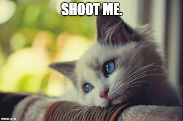 Sad cat | SHOOT ME. | image tagged in sad cat | made w/ Imgflip meme maker