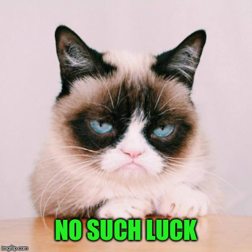 grumpy cat again | NO SUCH LUCK | image tagged in grumpy cat again | made w/ Imgflip meme maker