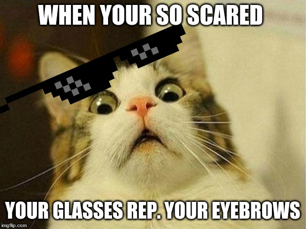 Scared Cat Meme | WHEN YOUR SO SCARED YOUR GLASSES REP. YOUR EYEBROWS | image tagged in memes,scared cat | made w/ Imgflip meme maker