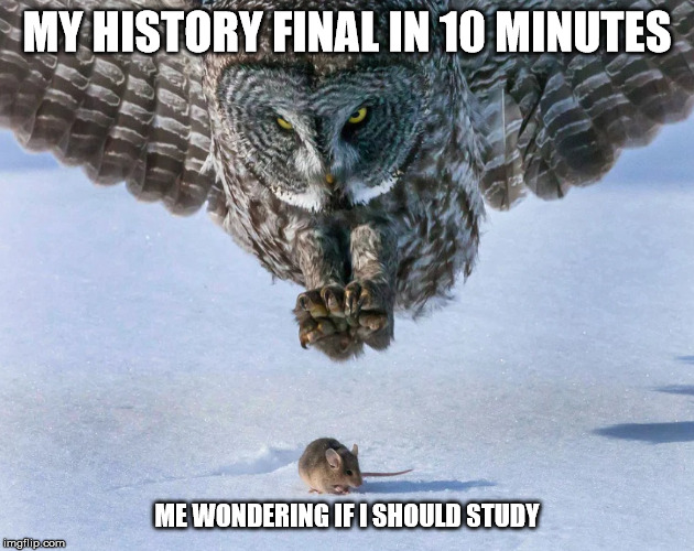 s | MY HISTORY FINAL IN 10 MINUTES ME WONDERING IF I SHOULD STUDY | image tagged in school | made w/ Imgflip meme maker