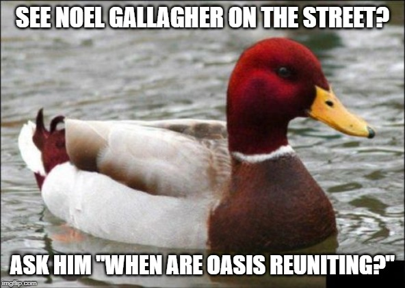 "Malicious Advice Mallard | SEE NOEL GALLAGHER ON THE STREET? ASK HIM ""WHEN ARE OASIS REUNITING?"" 