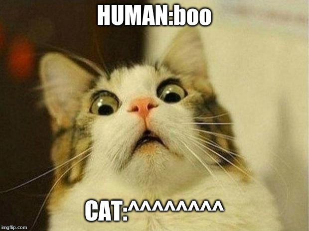 Scared Cat Meme | HUMAN:boo CAT:^^^^^^^^ | image tagged in memes,scared cat | made w/ Imgflip meme maker