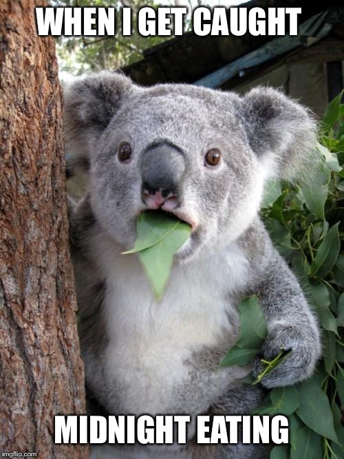 Surprised Koala | WHEN I GET CAUGHT MIDNIGHT EATING | image tagged in memes,surprised koala,eating | made w/ Imgflip meme maker