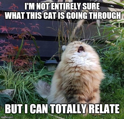 Facing the torments of the universe... | I'M NOT ENTIRELY SURE WHAT THIS CAT IS GOING THROUGH BUT I CAN TOTALLY RELATE | image tagged in screaming cat,relatable,funny,memes | made w/ Imgflip meme maker