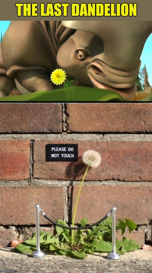 Flowers Memes Gifs Imgflip