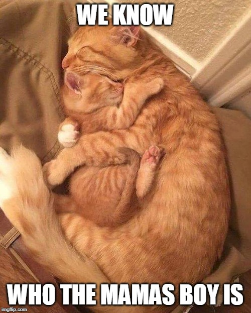 MAMA | WE KNOW WHO THE MAMAS BOY IS | image tagged in cat snuggles,mamas boy,kitten,cats,funny | made w/ Imgflip meme maker