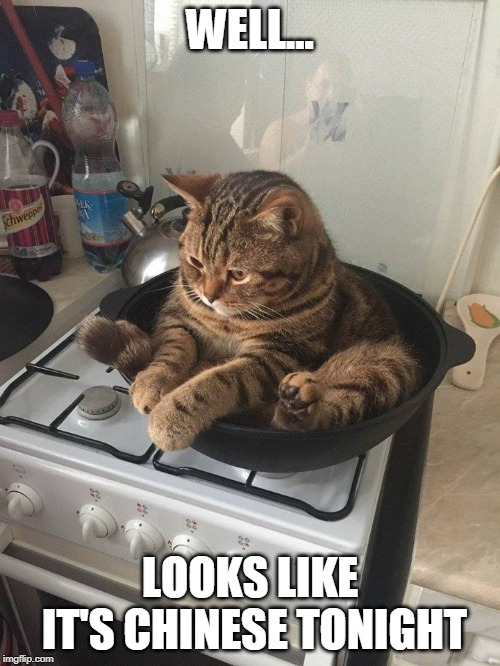 STOVE CAT | WELL... LOOKS LIKE IT'S CHINESE TONIGHT | image tagged in frying pan cat,cats,funny,funny cats | made w/ Imgflip meme maker