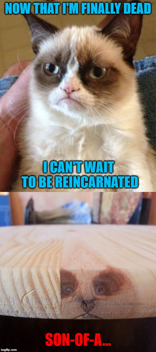 Be careful what you wish for! |  NOW THAT I'M FINALLY DEAD; I CAN'T WAIT TO BE REINCARNATED; SON-OF-A... | image tagged in memes,grumpy cat,reincarnation,funny,careful what you wish for,can't win | made w/ Imgflip meme maker