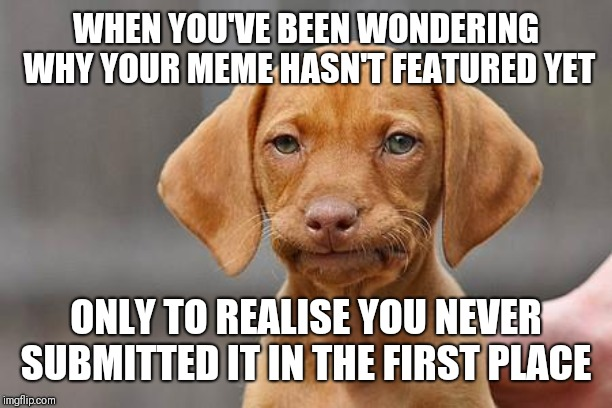 Dissapointed puppy |  WHEN YOU'VE BEEN WONDERING WHY YOUR MEME HASN'T FEATURED YET; ONLY TO REALISE YOU NEVER SUBMITTED IT IN THE FIRST PLACE | image tagged in dissapointed puppy | made w/ Imgflip meme maker
