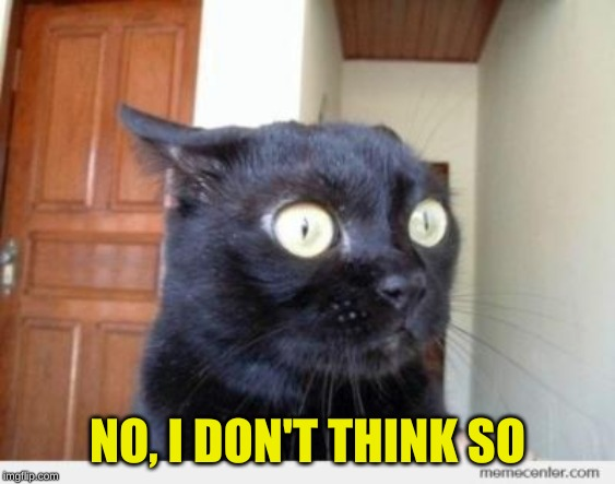 Scared Cat | NO, I DON'T THINK SO | image tagged in scared cat | made w/ Imgflip meme maker