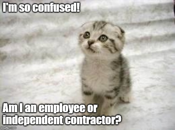 Sad Cat |  I'm so confused! Am I an employee or independent contractor? | image tagged in memes,sad cat | made w/ Imgflip meme maker