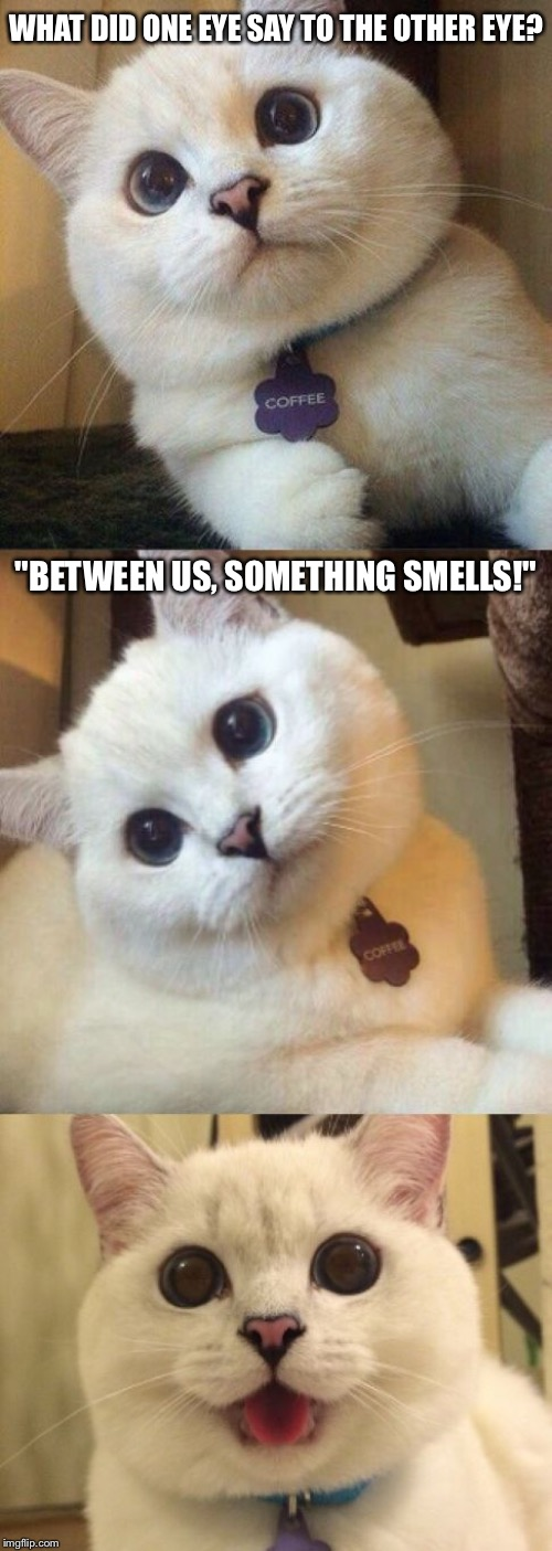 "That's For Sure! |  WHAT DID ONE EYE SAY TO THE OTHER EYE? ""BETWEEN US, SOMETHING SMELLS!"" 
