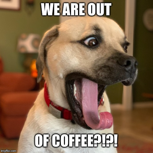 Out of coffee | WE ARE OUT OF COFFEE?!?! | image tagged in puggle,dog,coffee,crazy | made w/ Imgflip meme maker