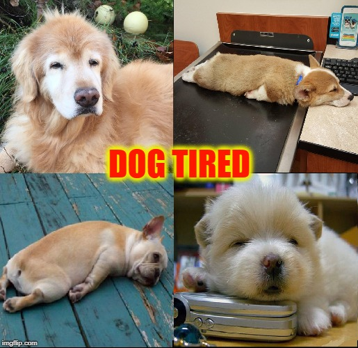 It's a Dog's Life... and quite tiring | DOG TIRED | image tagged in vince vance,dog memes,dogs,sleepy dog,pugs,sleepy time pups | made w/ Imgflip meme maker