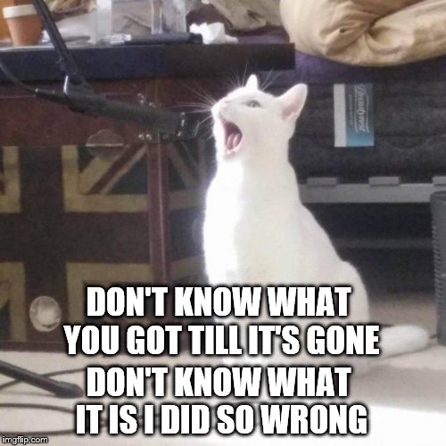 DON'T KNOW WHAT YOU GOT TILL IT'S GONE DON'T KNOW WHAT IT IS I DID SO WRONG | image tagged in cat singing into a microphone | made w/ Imgflip meme maker