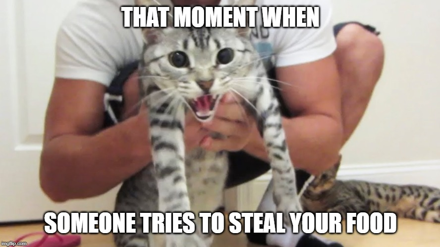 Angry Nylah | THAT MOMENT WHEN SOMEONE TRIES TO STEAL YOUR FOOD | image tagged in angry nylah,bfvsgf,prankvsprank | made w/ Imgflip meme maker